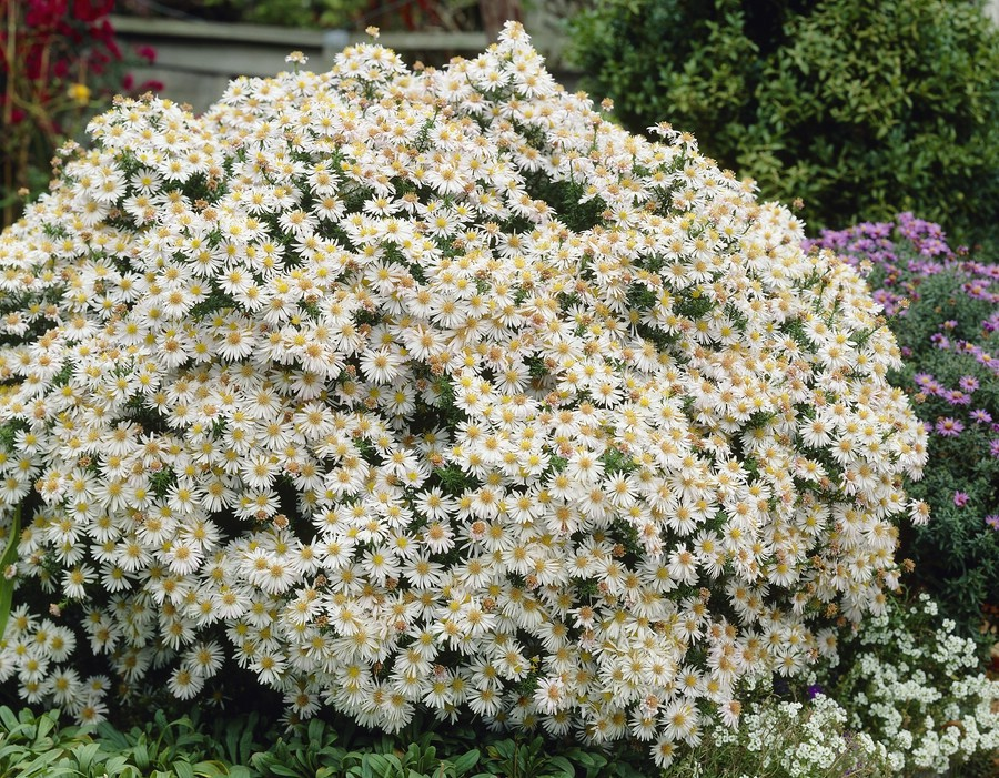 Цветущие все лето для своей клумбы