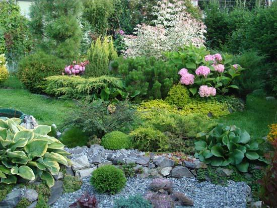Хвойные растения подчеркнут