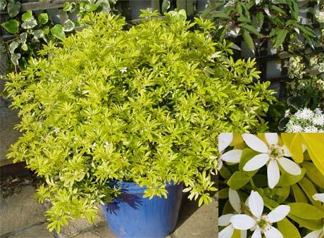 растения для зимнего сада