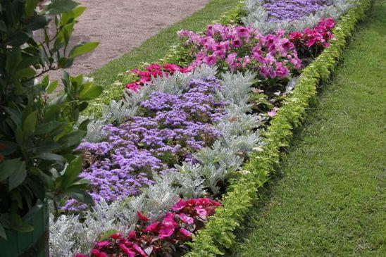 цветы для рабатки