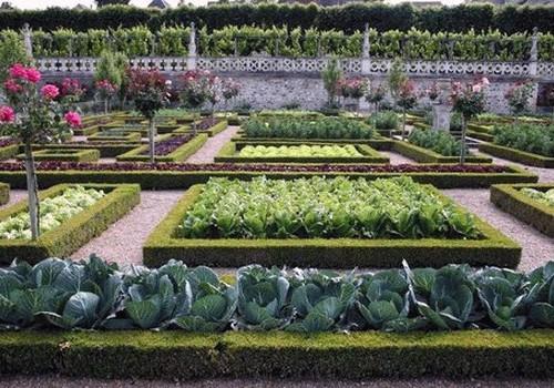 идеи для декоративного огорода