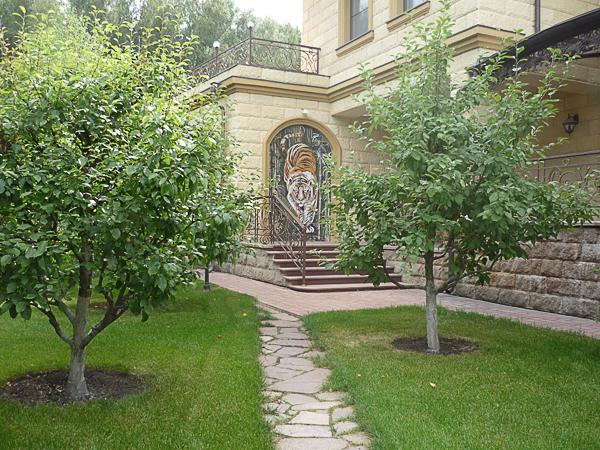 плодовый сад фото