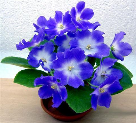цветущие горшечные изделия