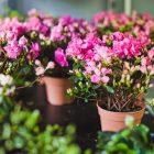 Цветы для домашнего выращивания 8 букв