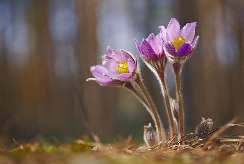 Цветы для альпийской горки многолетние
