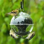 Как изготовить кормушку для птиц своими руками