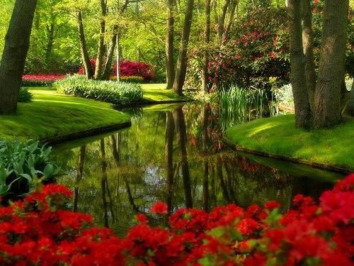 Декоративная трава для газона
