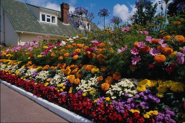 Многолетние цветы для дачи фото