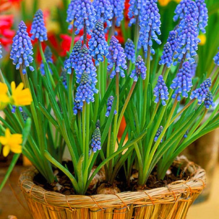 Многолетние вьющиеся цветы для дачи