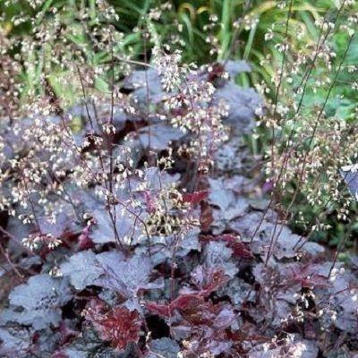 Лилии в ландшафтном дизайне фото
