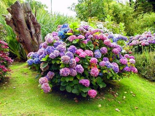 лесные и полевые цветы фото с названиями