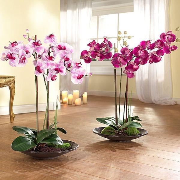 Выращивание орхидей в воде
