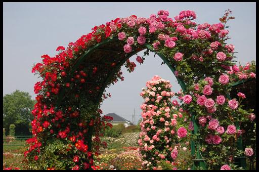 цветочные клумбы для дачи своими руками фото