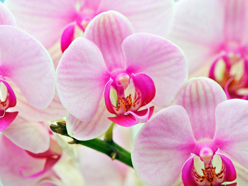 орхидея как ухаживать после цветения