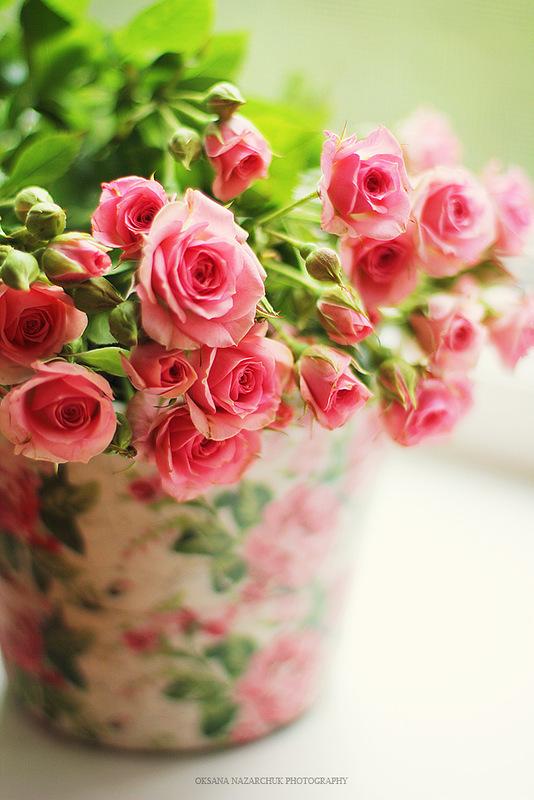 розы кустовые фото