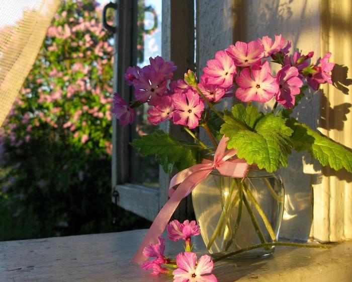 герань садовая фото