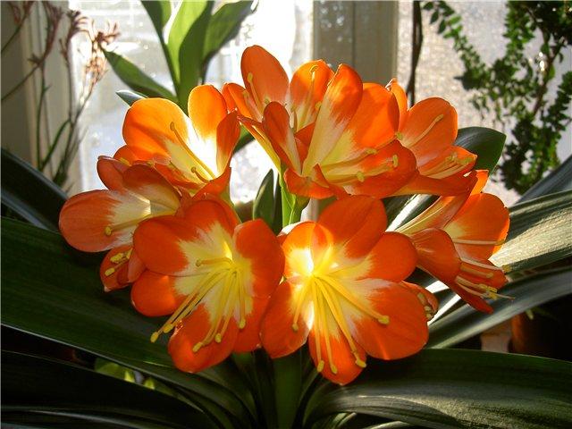 цветы декоративные фото