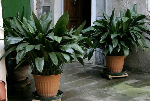 декоративные растения своими руками
