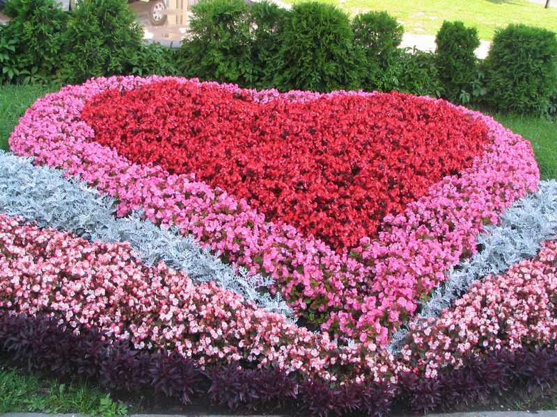 Цветник на даче фото