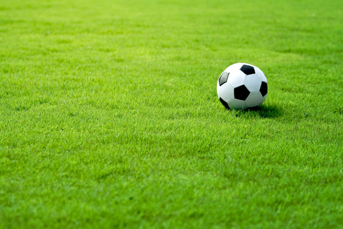 Какая трава лучше для газона
