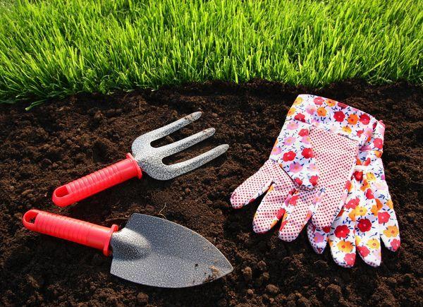 Трава для газона на даче