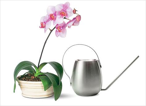 цветы орхидея как ухаживать