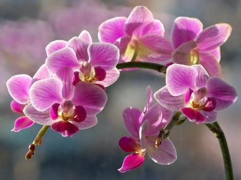 орхидея уход и пересадка
