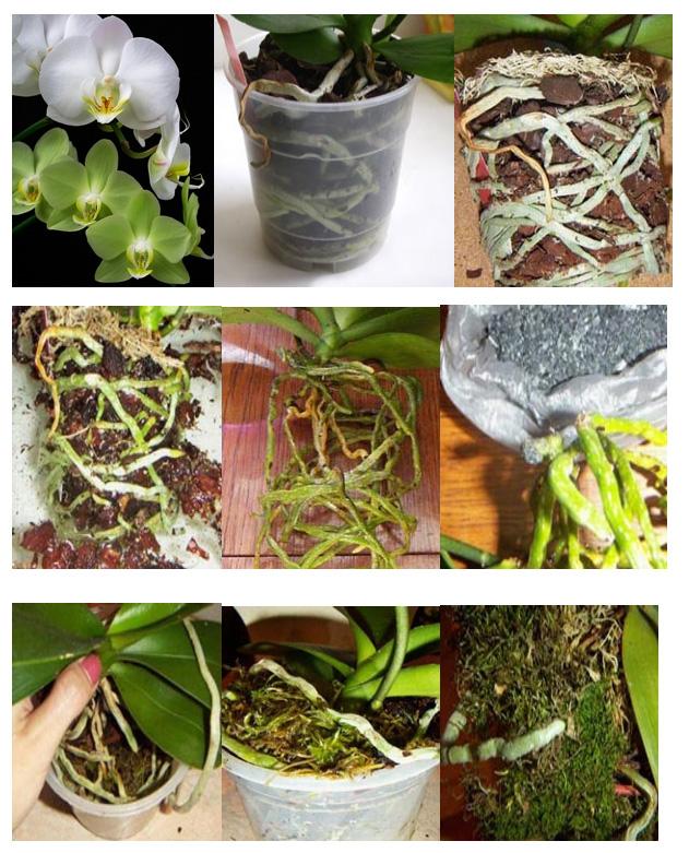 размещаются ссылки пересадка орхидеи пошаговое фото соорудить красивую рамку