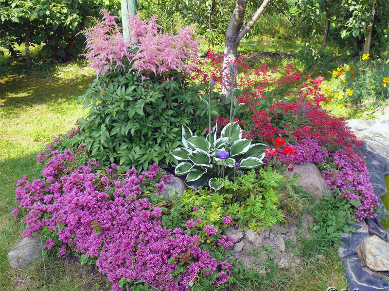 цветы на альпийской горке