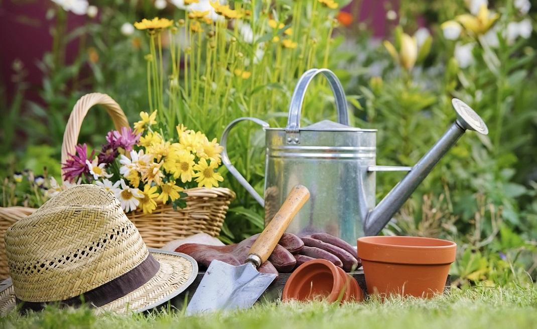 картинка фон в саду и огороде