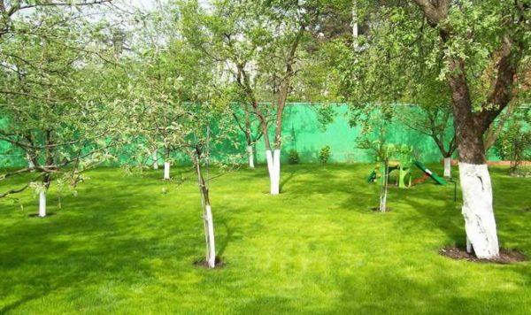 фруктовые деревья и кустарники