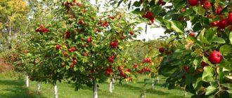 сажать фруктовые деревья и кустарники