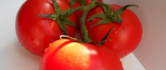 томаты