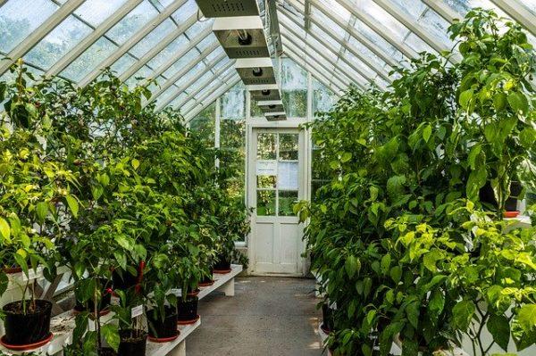 теплица с растениями