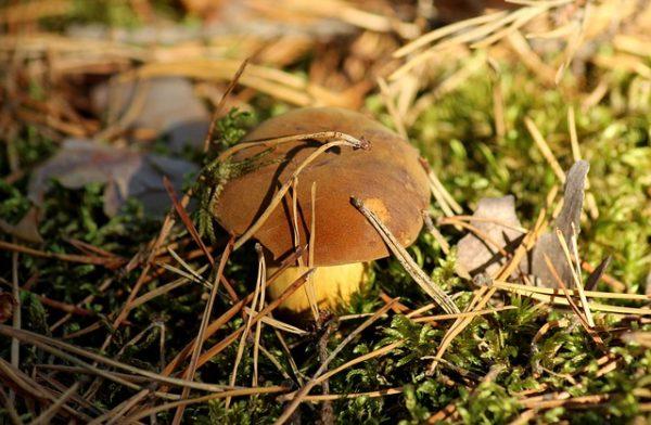 Как вырастить грибы на своем участке