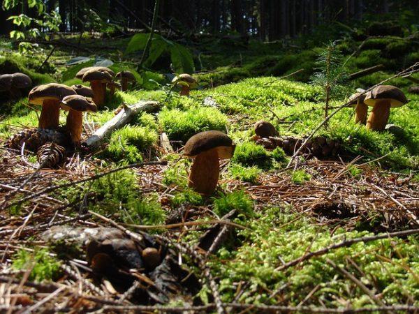 молодые грибы