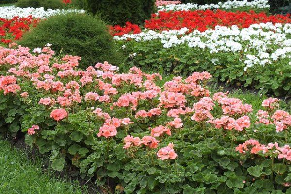 Клумба цветы