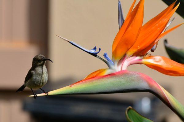 птица на цветке
