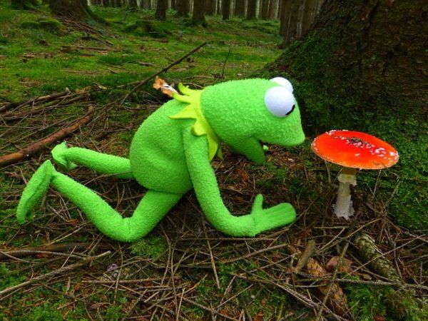 мухомор и лягушка