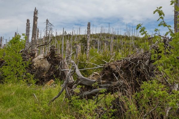 Жук-короед гибель леса