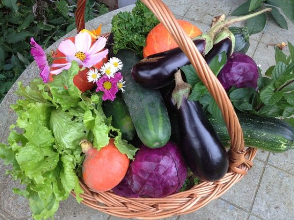 овощи выращенные на даче