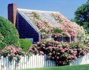 плетистые розы опоры своими руками