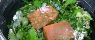 удобрить растения настоем фасолевой ботвы